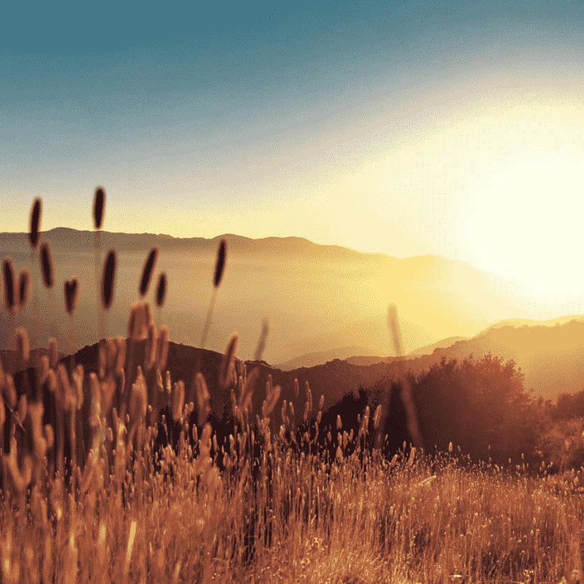 Pôr-do-sol num campo de trigo