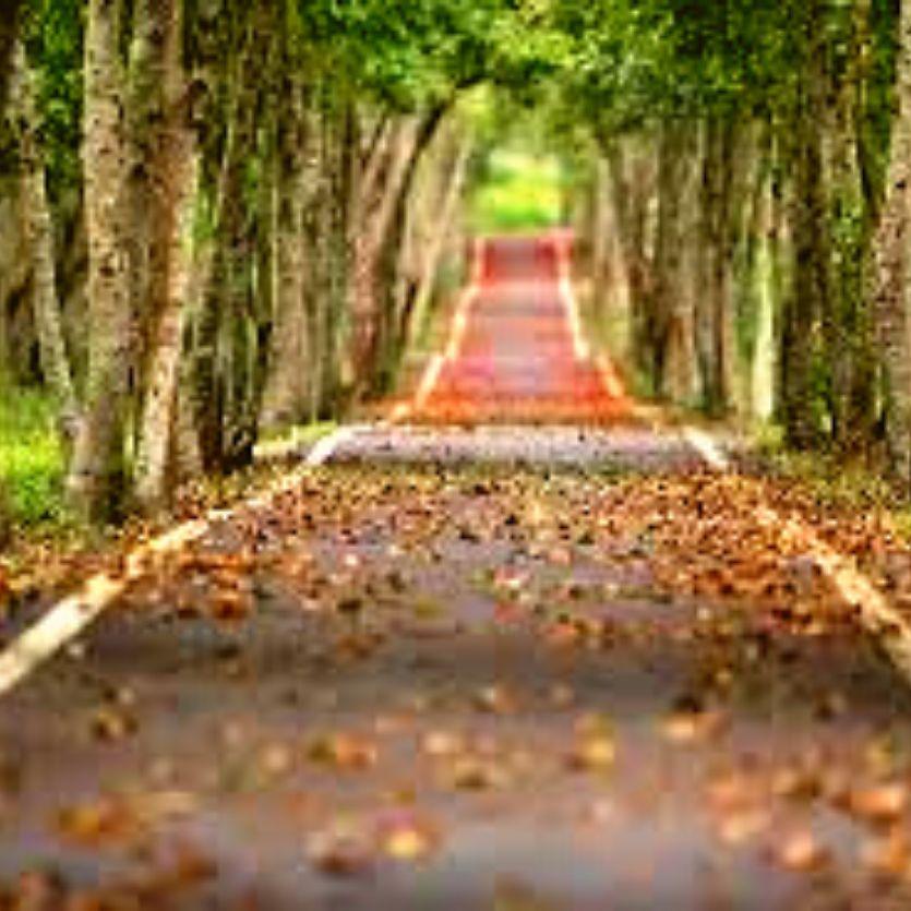 caminho asfaltado com folhas vermelhas no chão com árvores dos dois lados